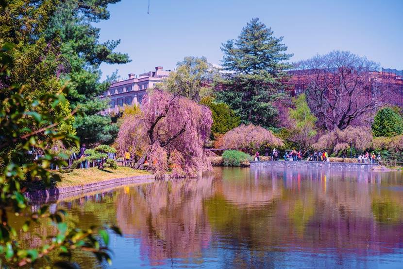Giardino Botanico a New York 2