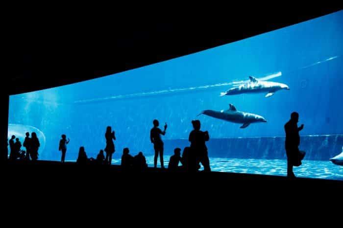 L'acquario e le meraviglie di Genova