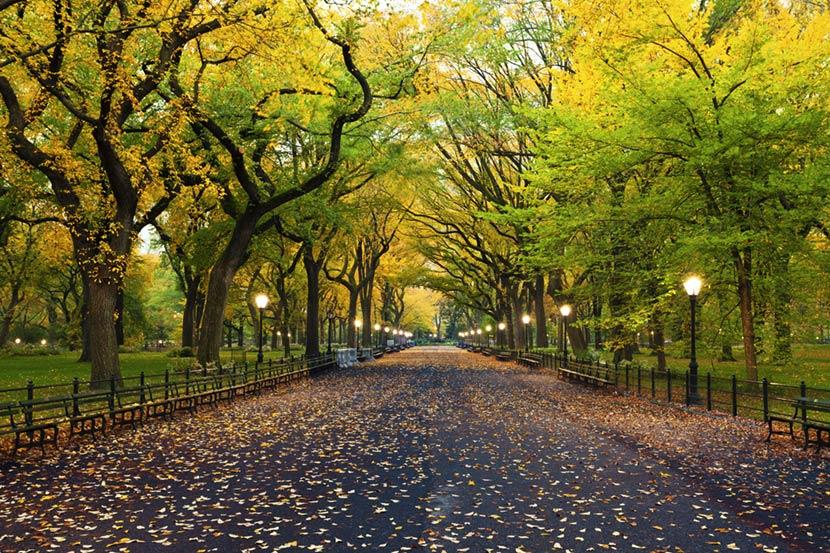 The Mall a Central Park a New york
