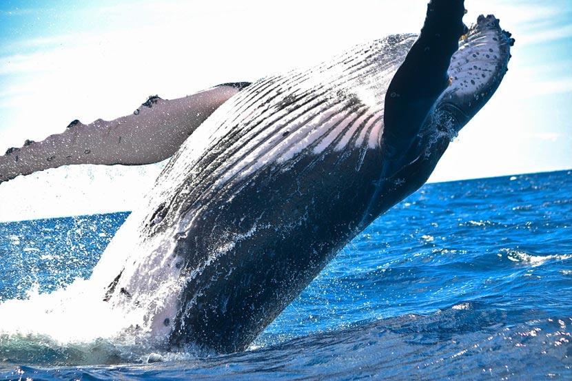 Balena Whalewatching Genova