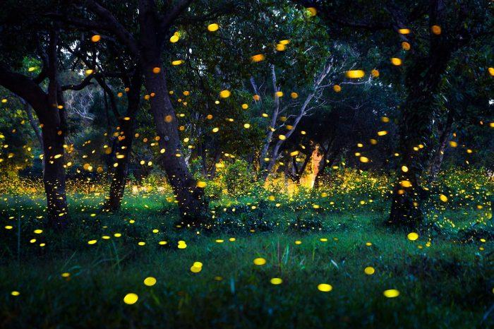 Cena con le lucciole sotto il Castello di Torrechiara