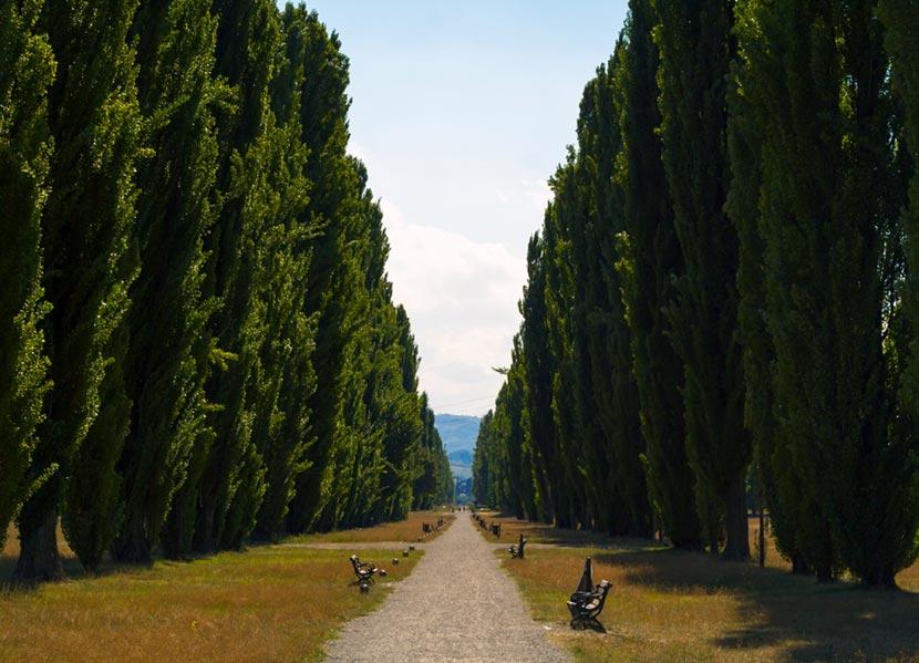 Viale del Giardino di Palazzo Ducale di Sassuolo