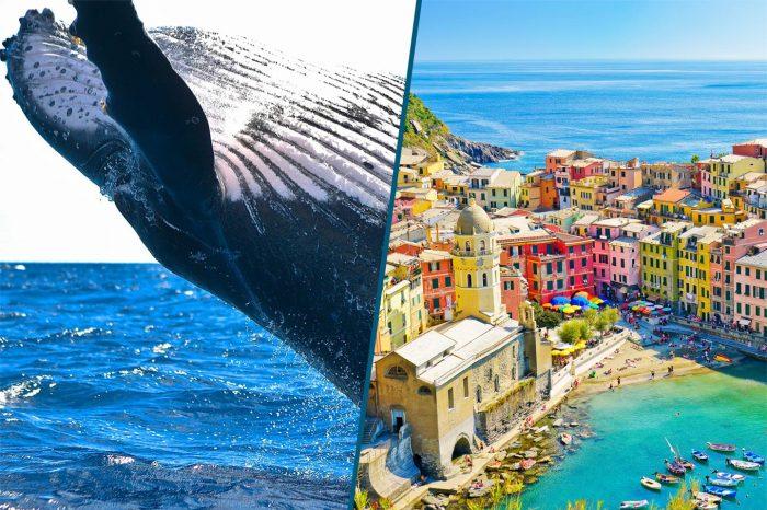 Tra balene e le 5 Terre