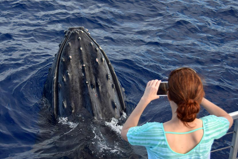 Avvistamento balene al Santuario dei Cetacei a Genova