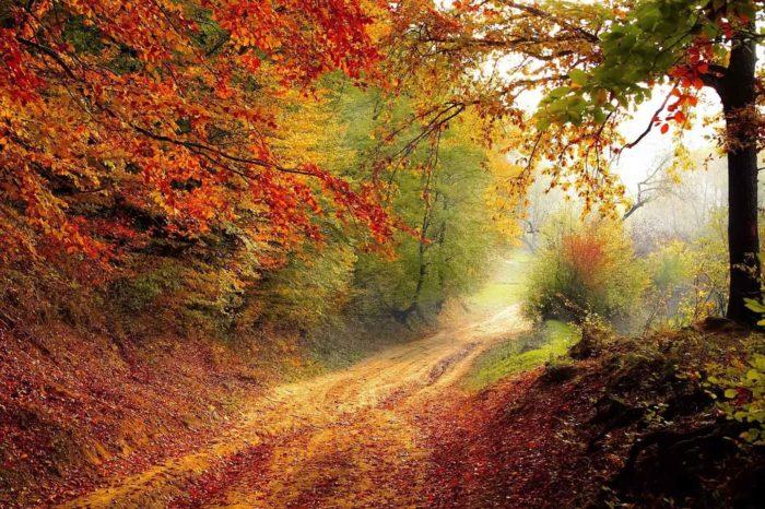 Foliage nel Bosco delle Fate